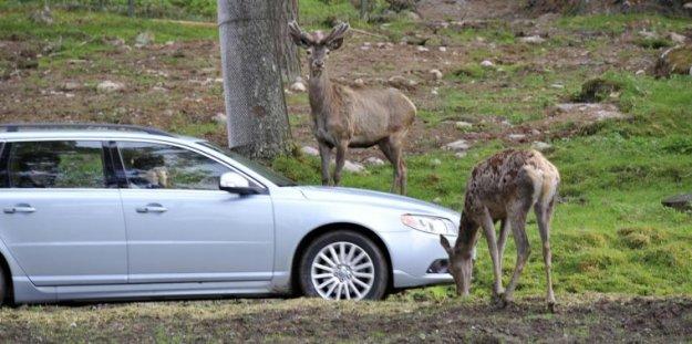 Volvo prijazen do živali